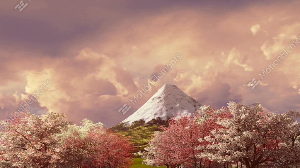 mt fuji and cherry blossom at sunset or sunrise stock animation