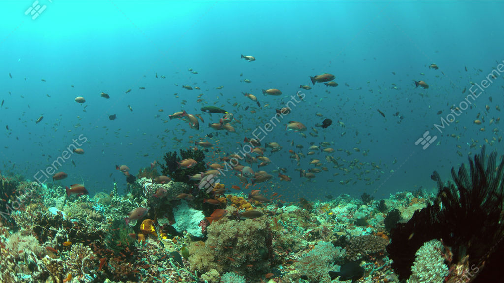 Coral reef with plenty fish 4k stock video footage 9403077 for Plenty of fish desktop