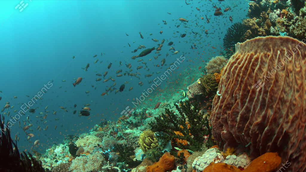 Coral reef with plenty fish 4k stock video footage 9403166 for Plenty of fish desktop