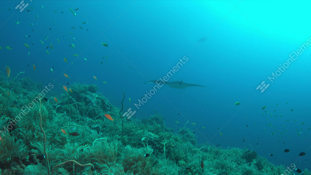 Coral reef with plenty fish 4k stock video footage 9420299 for Plenty of fish desktop