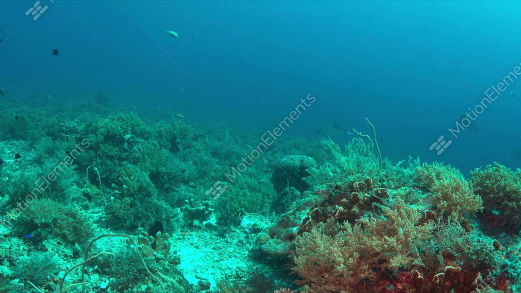Coral reef with plenty fish 4k stock video footage 9420303 for Plenty of fish desktop