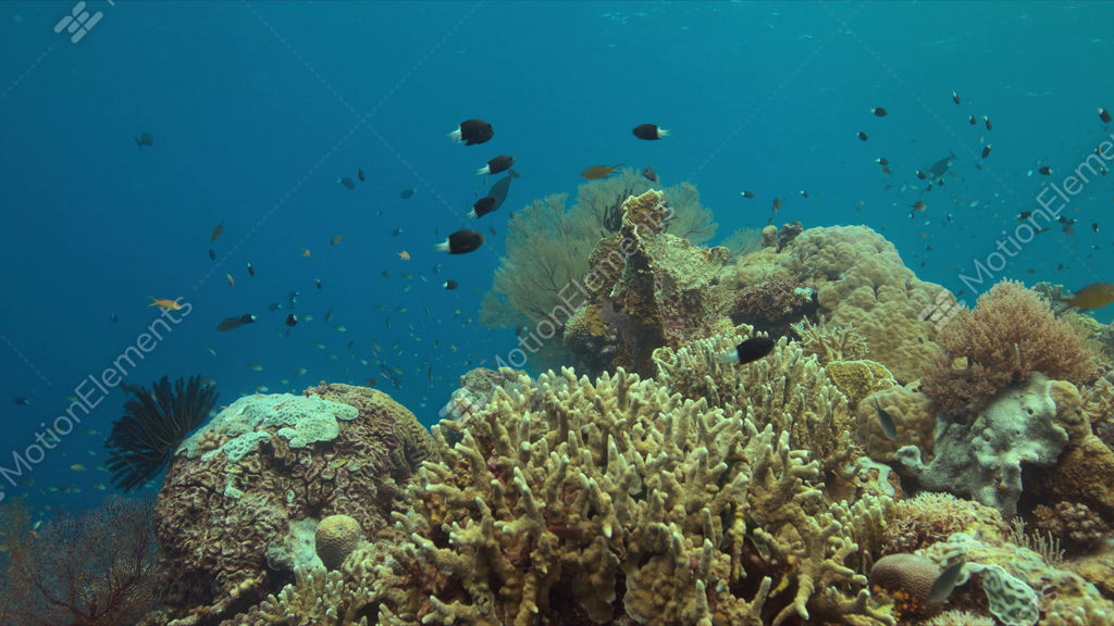 Coral reef with plenty fish 4k stock video footage 9431090 for Plenty of fish desktop