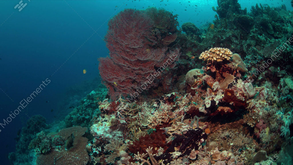 Coral reef with plenty fish 4k stock video footage 9581887 for Plenty of fish desktop