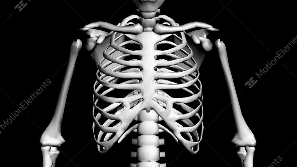 rotation of 3d skeleton.ribs,chest,anatomy,human,medical,body, Skeleton