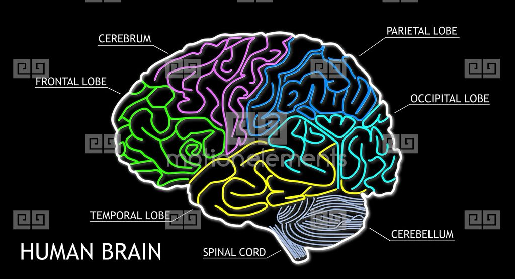 Animated human brain - photo#55