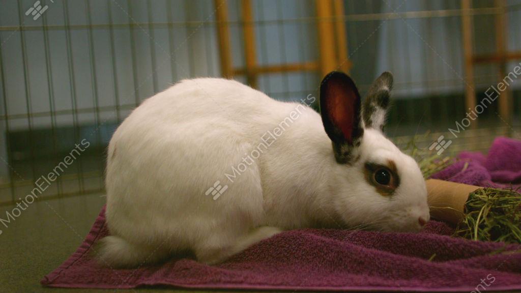 bunny rabbit sniffing around - photo #44