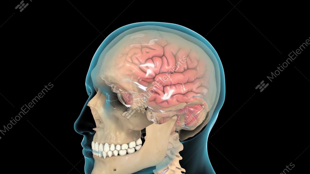 3d Animation Of Male Medical Brain Scan In Loop Temporal Lobe
