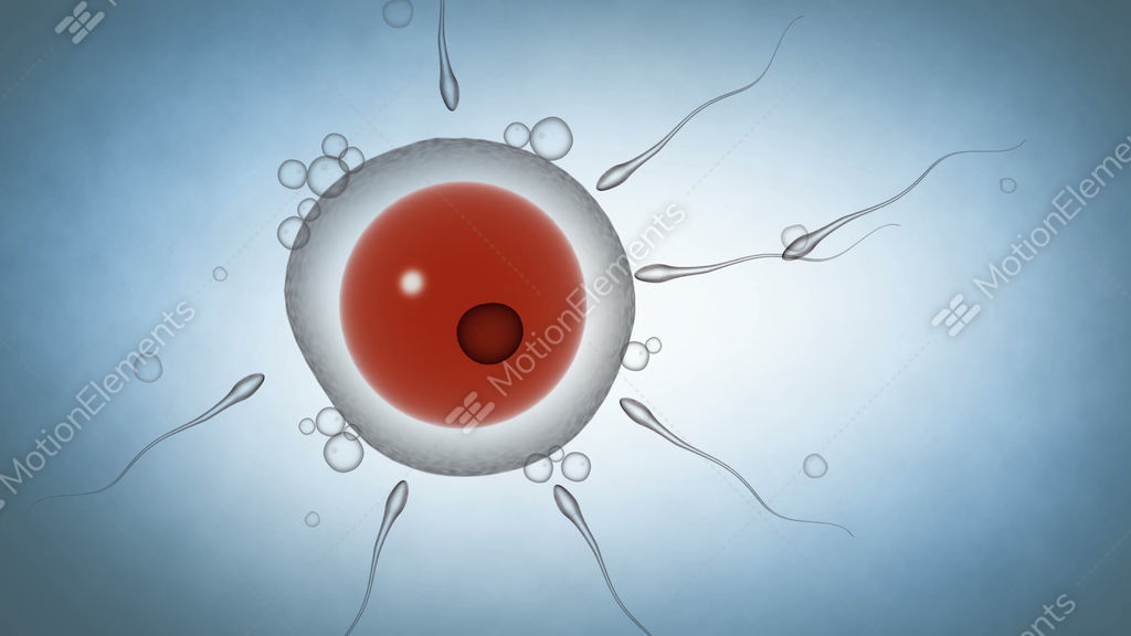 Video sperm fertilizing egg human — img 8