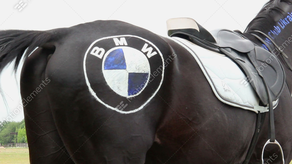 Funny Horse With Bmw Logo On Its Back Horsepower Symbol Stock Video