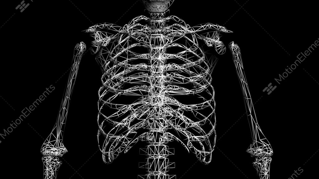 Rotation Of 3D Skeleton.ribs,chest,anatomy,human,medical,body,skull ...