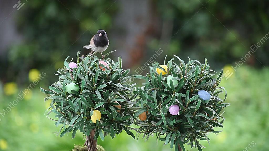 Bird On Easter Egg Tree Stock Video Footage 3981452